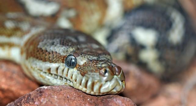 Der Raucher und die Schlange - Schlange als Symbolbild