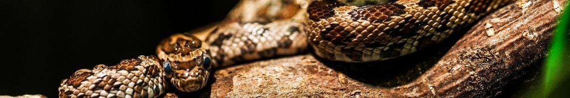 Der Raucher und die Schlange - Tier auf einem Ast