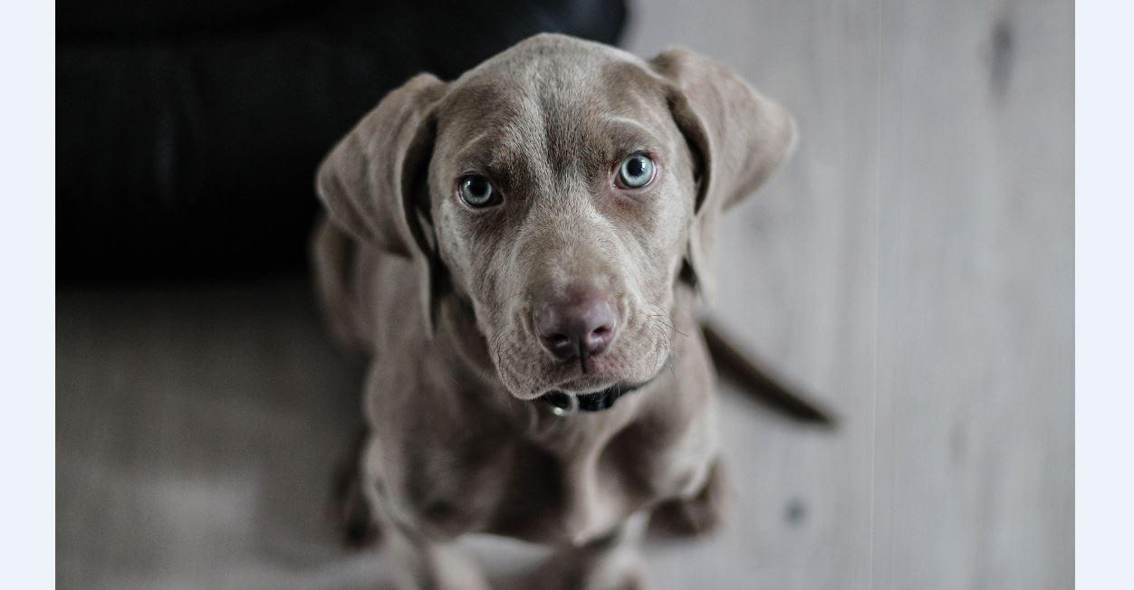 Hypnose Arbeit mit dem inneren Kind - Symbolbild Hund